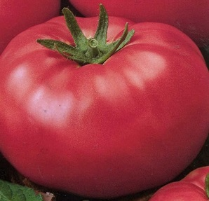 томат Сахарный бизон