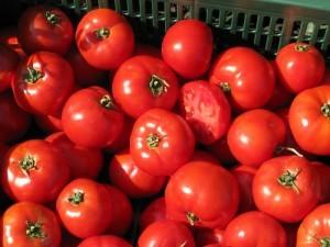 много красных томатов