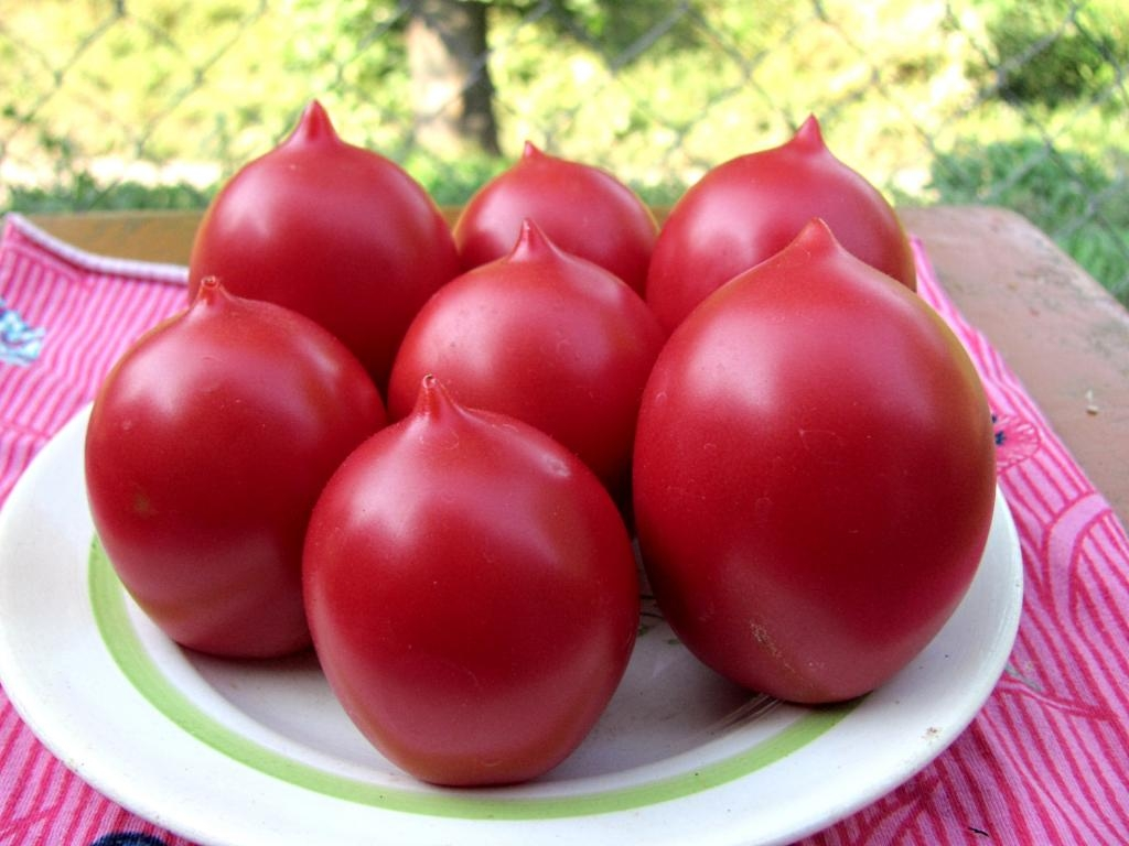 красные томаты на тарелке
