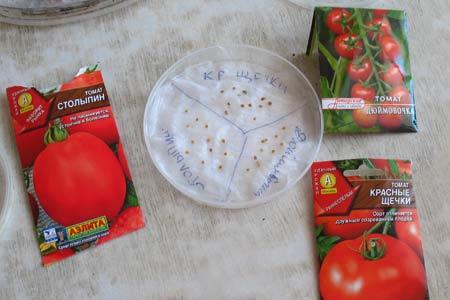 вымачивание семян томатов