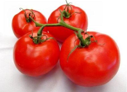 красные сочные помидоры на ветке