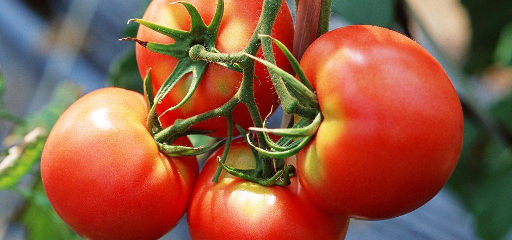 круглые красные томаты