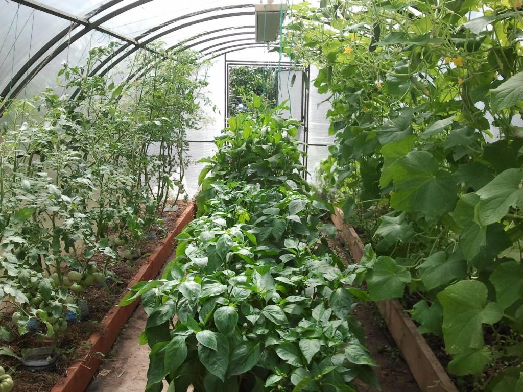 помидоры и другие растения