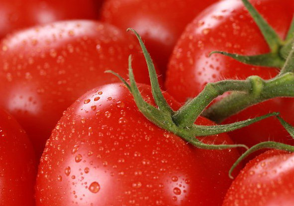 сочные красные томаты