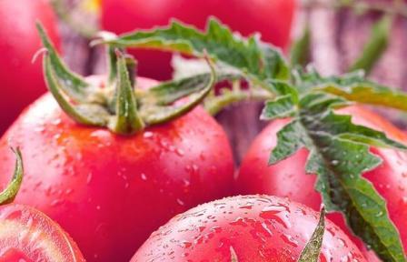 томат Малиновое чудо