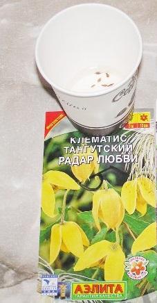 семена тангутского клематиса