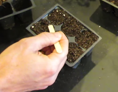 помидоры сажают на рассаду