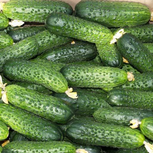 плоды огурцов Мирабелла F1