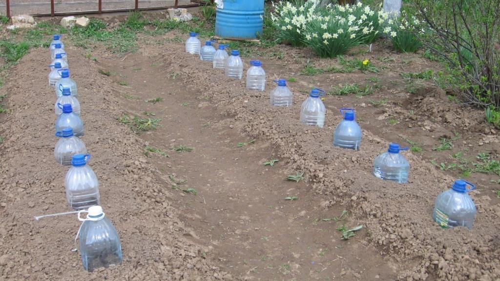 укрытие посаженных семян огурцов