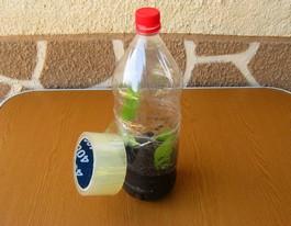 черенок в закрытой бутылке