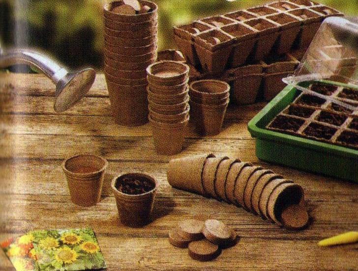 торфяные горшочки для выращивания петунии