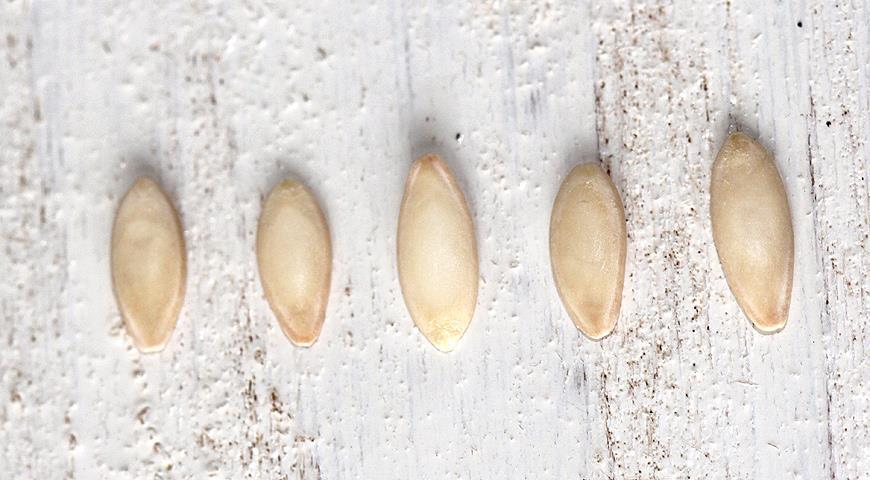 пять семян огурцов
