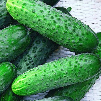 плоды огурцов урожайного сорта