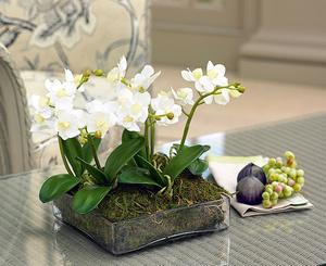 Пересаживаем орхидею в домашних условиях