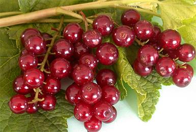 сочные ягоды смородины