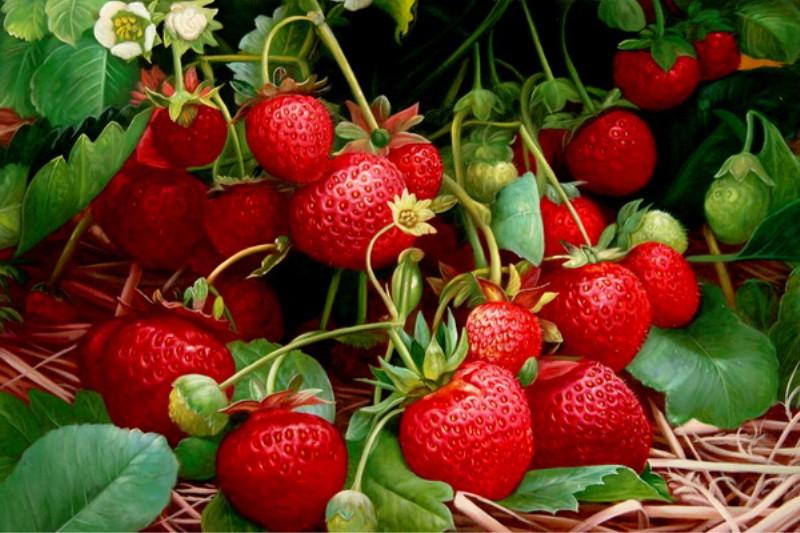 много ягод земляники
