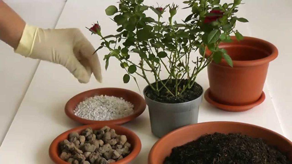 Как сажать комнатные цветы в горшок 140