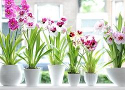 орхидеи расположенные в ряд