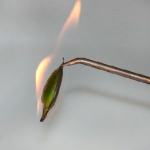 стерилизация орхидеи