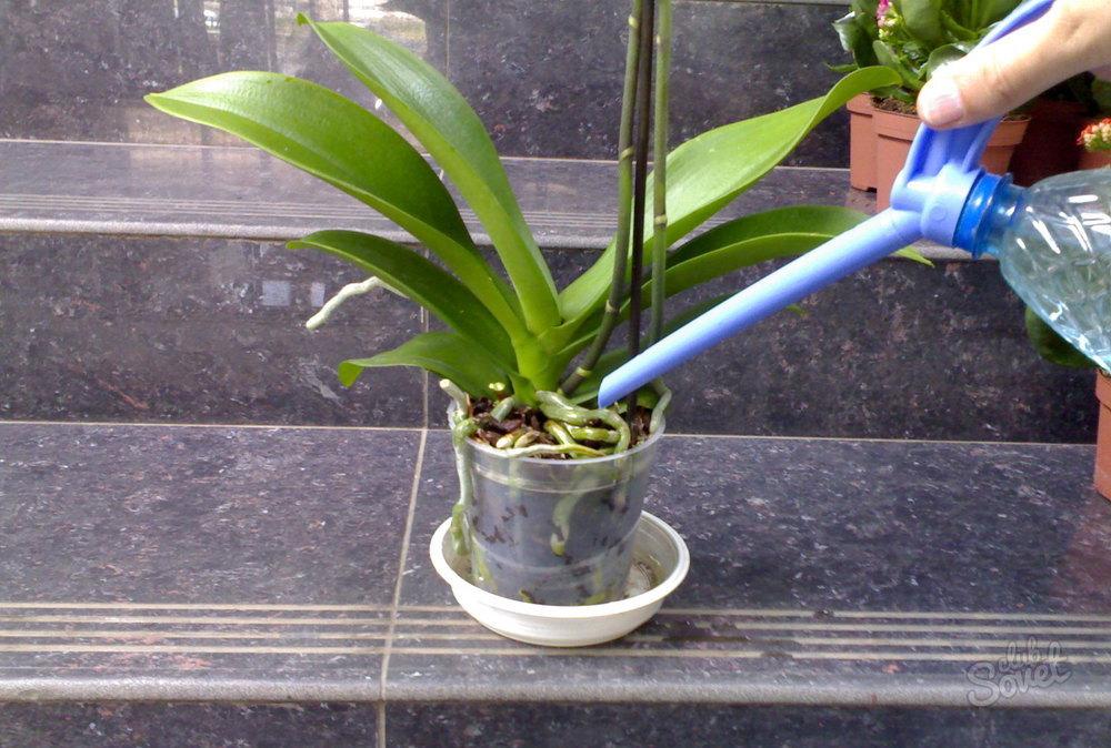 Как поливать орхидею в домашних условиях в горшке для начинающих
