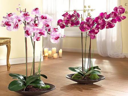 две орхидеи на полу
