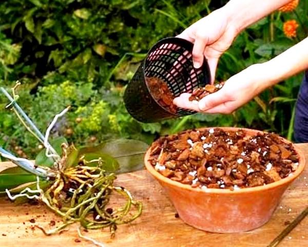 субстрат и горшок для орхидеи