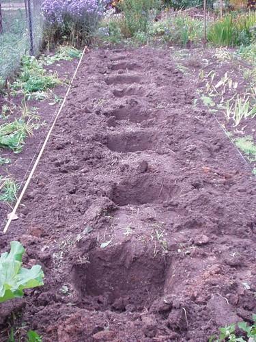 ямы для посадки пионов