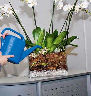 полив орхидеи из лейки