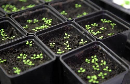 Самые лучшие сорта и виды петуний для домашнего, уличного выращивания