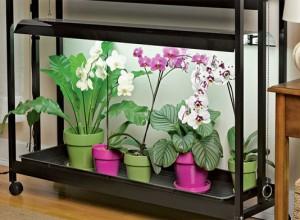орхидеи под лампой