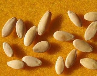 семена огурцов Конни