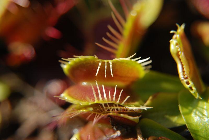 мухоловка Fondue