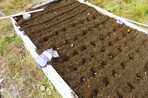 подготовка посадочного места для чеснока