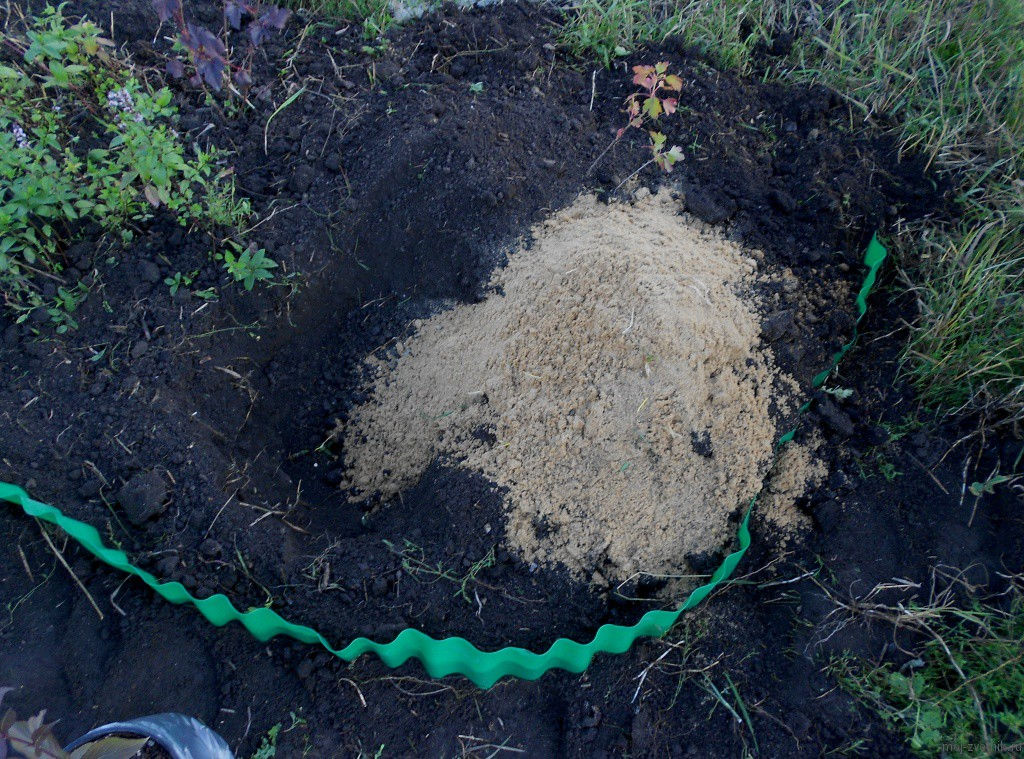рыхление почвы вейгелы