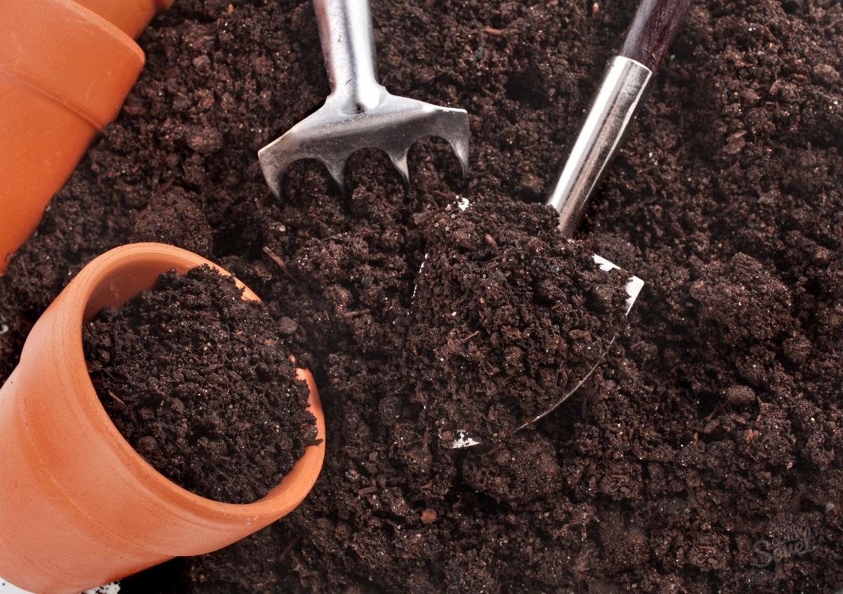 почва для рассады капусты