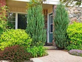 дом украшенный растениями