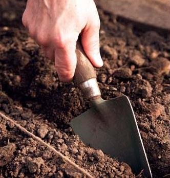подготовка лунок для капусты