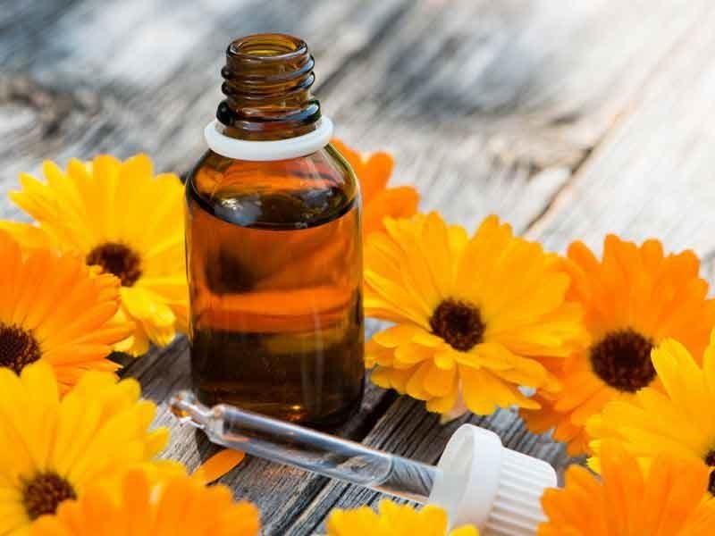 Календула - лечебные свойства, противопоказания и особенности использования
