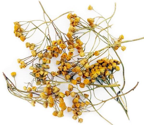 Цветки полыни полезные свойства
