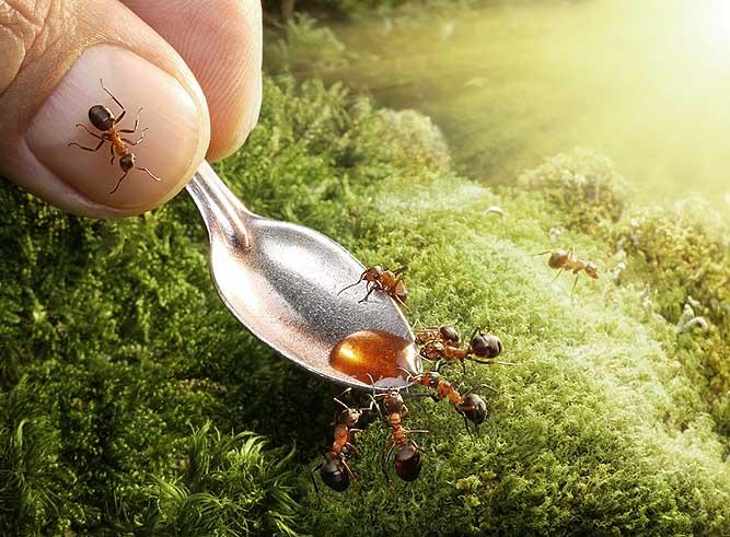 муравьи и мед