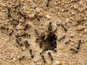 муравьи на участке