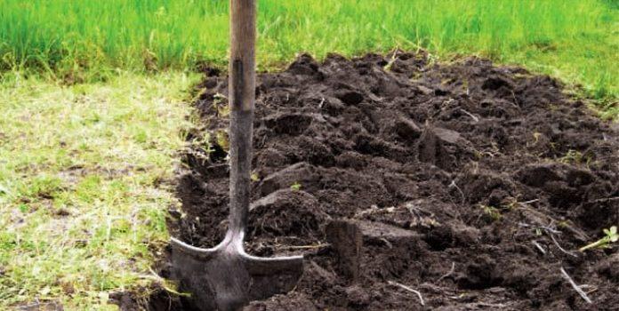 подготовка земли для жимолости