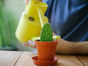отросток кактуса в горшке