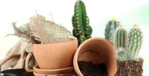 горшки и кактусы