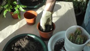подготовка нового горшка для кактуса