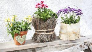 самодельные горшки с растениями