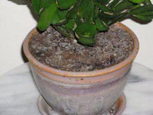 больная почва с растением
