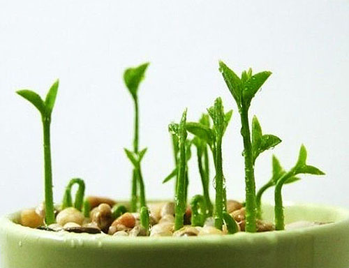 Как вырастить мандарин из косточки выращиваем в  247