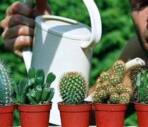 орошение кактусов